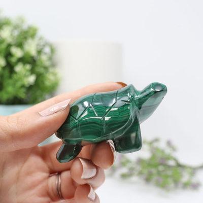 FIGMT - Malachite Turtle